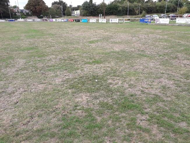Help save the outfield!